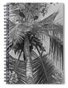 Coconut Palm Spiral Notebook