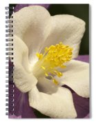 Columbine In The Morning Spiral Notebook