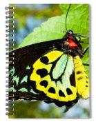 Common Birdwing Butterfly Spiral Notebook