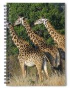 Common Giraffe Spiral Notebook