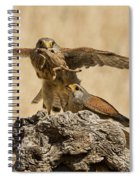 Common Kestrel Falco Tinnunculus Spiral Notebook