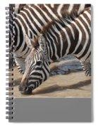 Common Zebras Drinking Water Spiral Notebook