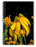 Coneflowers Echinacea Yellow Painted Spiral Notebook