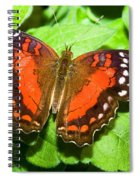 Coolie Butterfly Spiral Notebook
