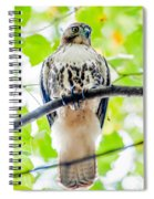 Coopers Hawk Perched On Tree Watching For Small Prey Spiral Notebook