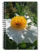 Coulter's Matilija Poppy 1 Spiral Notebook
