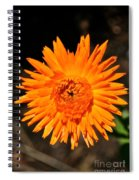 Country Colors Spiral Notebook