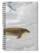 Crabeater Seal, Antarctica Spiral Notebook