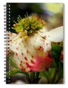 Cranberry Dogwoods Spiral Notebook
