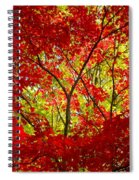 Crimson Window Spiral Notebook