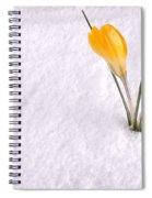 Crocus In Snow Yellow Spiral Notebook