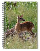 Curious Whitetail Spiral Notebook