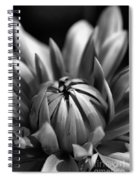 Dahlia Flower  Spiral Notebook