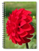 Dahlia Named Ali Oop Spiral Notebook