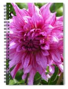 Dahlia Named Annette C Spiral Notebook