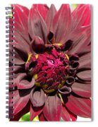 Dahlia Named Black Wizard Spiral Notebook