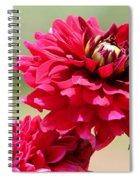 Dahlia Named Caproz Jerry Garcia Spiral Notebook