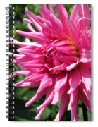Dahlia Named Pretty In Pink Spiral Notebook