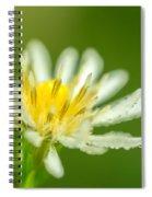 Daisy Fleabane Erigeron Annuus Spiral Notebook