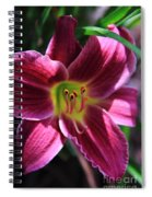 Day Lily 2 Spiral Notebook