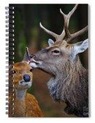 Deer Love Spiral Notebook