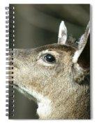 Deer Sunshine Profile Spiral Notebook
