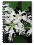Dianthus Superbus - White Spiral Notebook