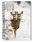 Doe Mule Deer In Snow Spiral Notebook