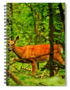 Doe On The Move Spiral Notebook