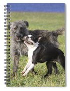 Dogs Playing With Stick Spiral Notebook