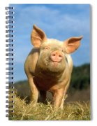 Domestic Pig Spiral Notebook