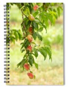 Donut Peaches Spiral Notebook