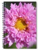 Double Click Cosmos Named Rose Bonbon Spiral Notebook