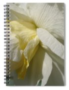 Double Daffodil Named White Lion Spiral Notebook