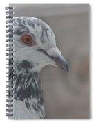 Dove Pigeon Spiral Notebook