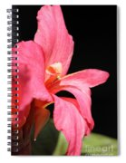Dwarf Canna Lily Named Shining Pink Spiral Notebook
