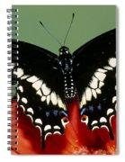 Eastern Black Swallowtail Butterfly Spiral Notebook