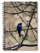 Eastern Bluebird Spiral Notebook