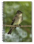 Eastern Wood Pewee Spiral Notebook