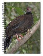 Edwards Pheasant Spiral Notebook