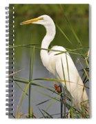Egret In The Cattails Spiral Notebook