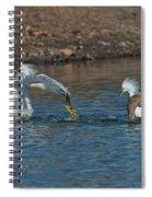Egrets Robbing A Cormorant Spiral Notebook