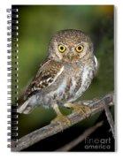 Elf Owl Spiral Notebook