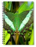 Emerald Swallowtail Butterfly Spiral Notebook
