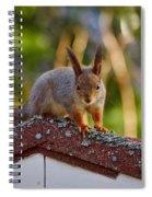 Eurasian Red Squirrel Spiral Notebook