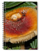 Fairy Mushrooms Spiral Notebook