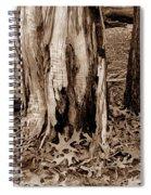 Fall Leaves V I Spiral Notebook