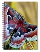 Female Promethea Moth Spiral Notebook