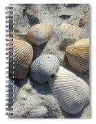 Fernandina Shells  Spiral Notebook