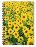 Field Of Sunflowers Helianthus Sp Spiral Notebook